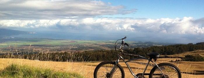 Maui Downhill Bicycle Safaris is one of Locais salvos de Bryan.