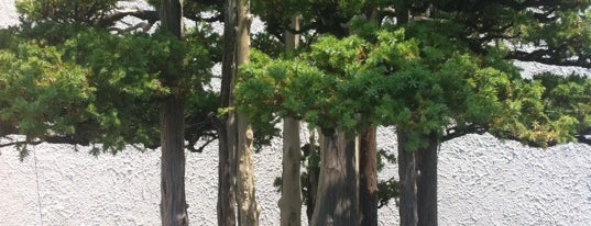 National Bonsai and Penjing Museum is one of D.C. Weekender: Sites & Stuff.