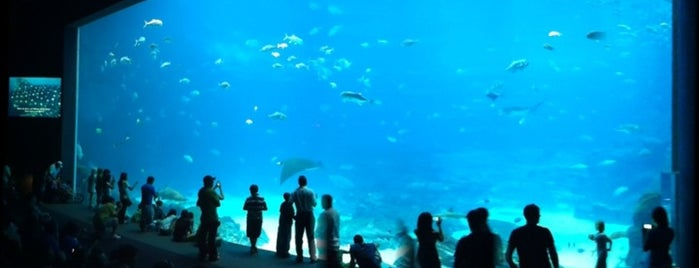 Georgia Aquarium is one of Best Places to Check out in United States Pt 1.