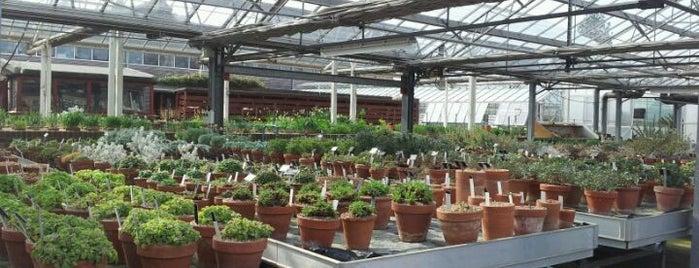 Kew Gardens Herbarium is one of Po stopách Karla Čapka v Anglii.