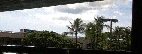 My Favorite Oahu