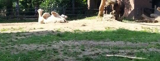 Kamelen is one of Orte, die Kevin gefallen.