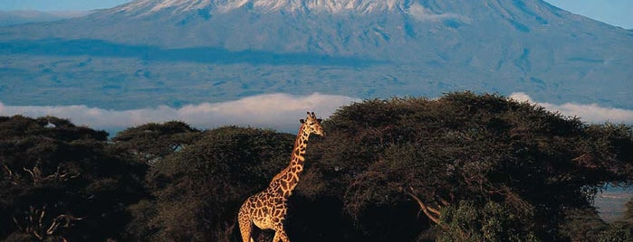 Mount Kilimanjaro is one of World Heritage Sites List.