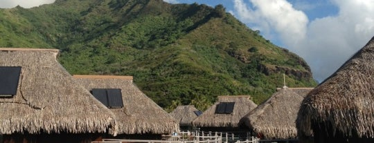 Hilton is one of Moorea.