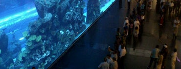 Dubai Aquarium is one of Best of World Edition part 3.