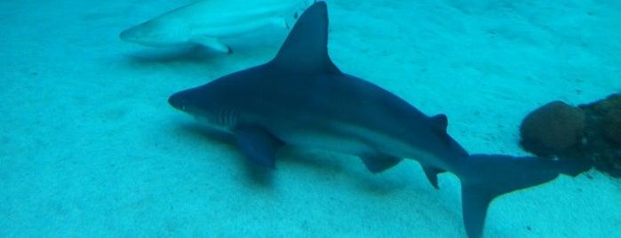 Aquarium of the Pacific is one of Zoos/Aquariums in CA.