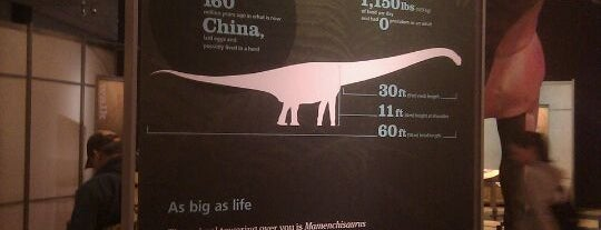 World's Largest Dinosaurs Exhibit at the American Museum of Natural History is one of Interesting....