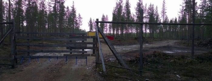 Teeriniemi is one of Finland فنلندا.