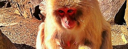 Jigokudani Snow Monkey Park is one of Mike 님이 좋아한 장소.