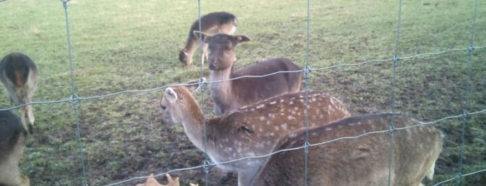 Scottish Deer Centre is one of Laurence'nin Beğendiği Mekanlar.