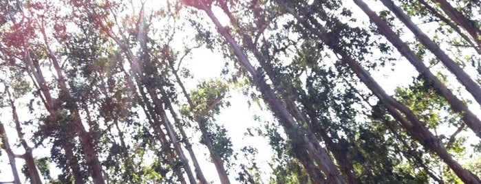 Monarch Grove Sanctuary is one of HWY1: Santa Cruz to Monterey/Carmel.