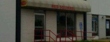 Red Squirrel is one of Lugares favoritos de Kyle.