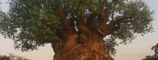 Disney's Animal Kingdom is one of Best Places to Check out in United States Pt 1.