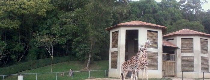Zoológico Municipal de Curitiba is one of Lazer em Curitiba.
