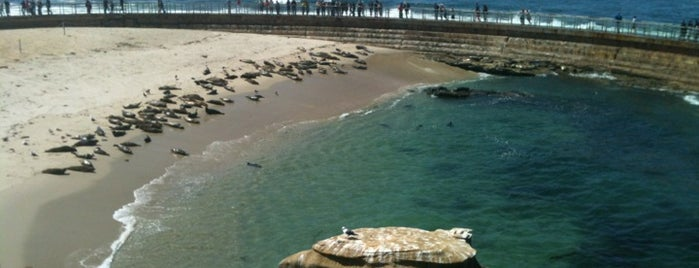 Children's Pool Beach is one of San Diego's 59-Mile Scenic Drive.