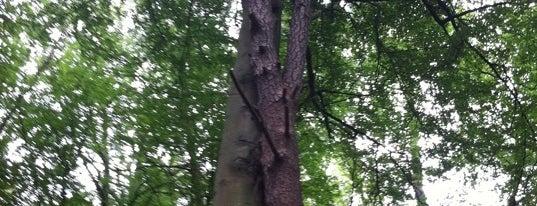 Die zwei verliebten Bäume is one of Crazy Places.