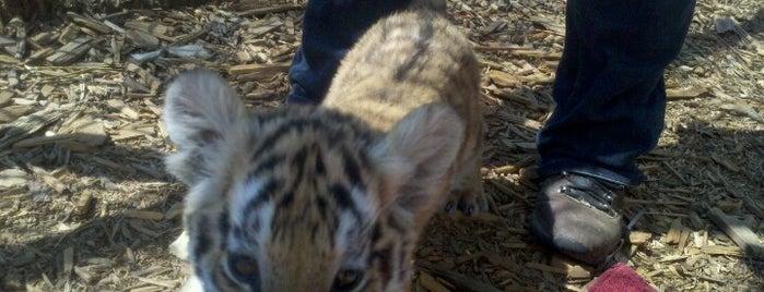 Serenity Springs Wildlife Center is one of สถานที่ที่ Danielle ถูกใจ.