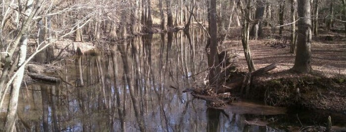 Congaree National Park is one of American National Parks.