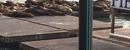 Sea Lions at Pier 39 is one of SF.
