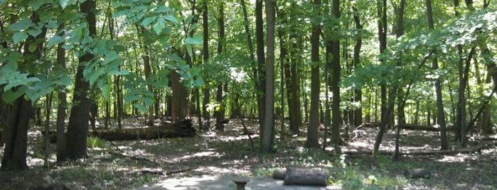 Edgebrook Woods is one of Andy : понравившиеся места.