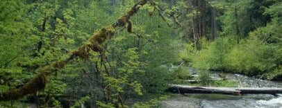 Sol Duc Campgrounds is one of Camping/Hiking in Western Washington.