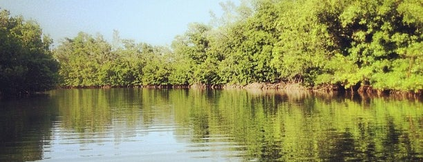 Oleta-Kayaking is one of Miami.