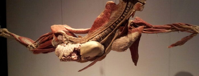 Body Worlds Napoli is one of NAPLES - ITALY.