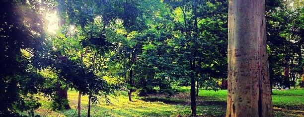 Parque Ibirapuera is one of Vale uma Foto.