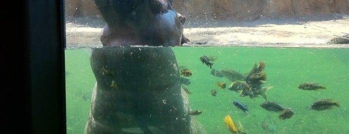 San Antonio Zoo is one of San Antonio - Get Full. Have Fun. #visitUS #4sq.