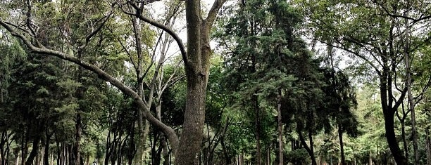 Bosque de Chapultepec is one of Ciudad de Mexico 2013.