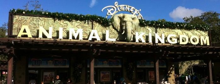 ディズニー・アニマルキングダム is one of Disney Sightseeing: Animal Kingdom.