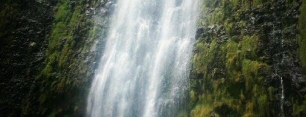 Waimoku Falls is one of Maui.