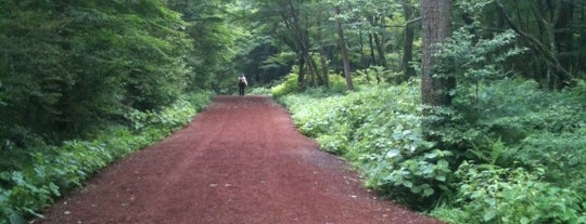 Saryeoni Forest Path Entrance is one of Jeju.