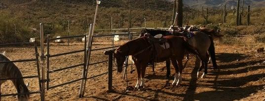 MTM Ranch and Horse Adventures is one of Orte, die Jordan gefallen.