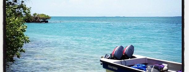 Oceanario Islas del Rosario is one of Great Scuba.