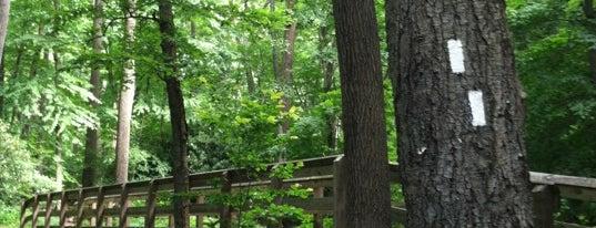 Appalachian Trail - Dunnfield Creek is one of NJ Waterfalls.