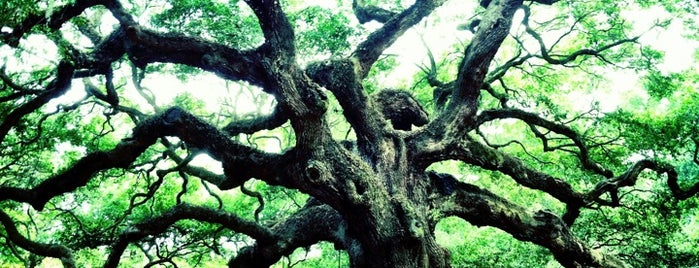 Angel Oak Tree is one of Best Places to Check out in United States Pt 7.