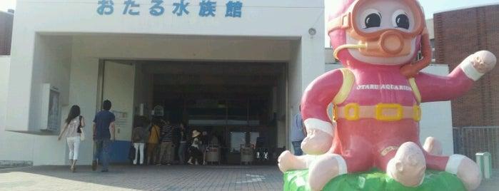 Otaru Aquarium is one of Japan 🇯🇵.