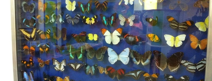 Insectarium is one of Unusual and Interesting in Philly.