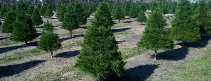 Old Time Christmas Tree Farm is one of Places To Visit In Houston.