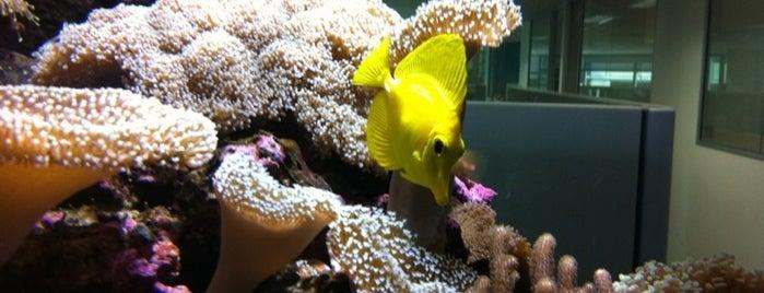 The Fish Tank @ IAGAM is one of สถานที่ที่บันทึกไว้ของ Denea.