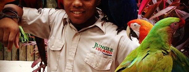 Jungle Island is one of Spring Break 2012 – Miami.