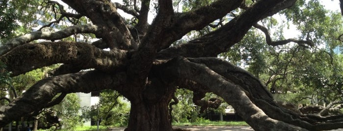 Treaty Oak Park is one of My trip to Florida.