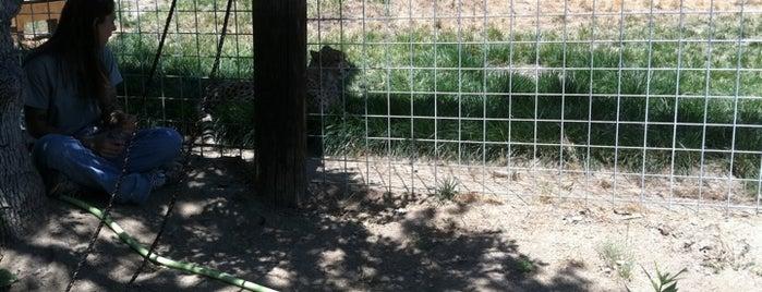 Sierra Endangered Cat Haven is one of Zoos/Aquariums in CA.
