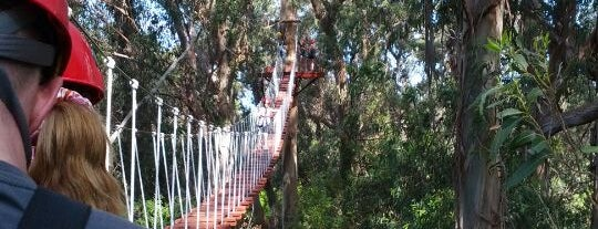 Piiholo Ranch Zipline is one of Things to do in Maui.