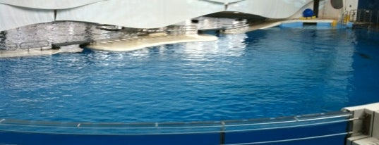 Dolphin Show is one of Baltimore, MD.