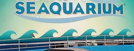 Miami Seaquarium is one of Kids love South Florida.