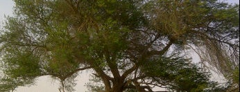 Tree Of Life is one of When in BAHRAIN !.