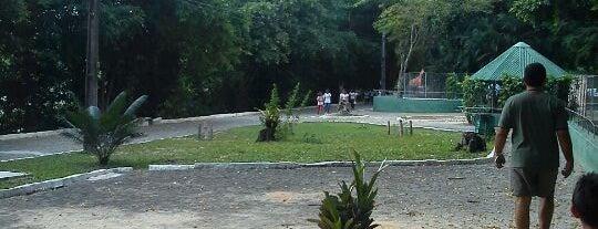 Parque Dois Irmãos is one of Locais Favoritos em Recife.