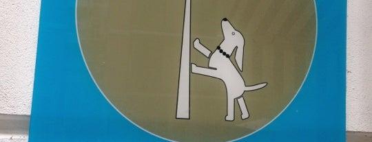 HAUPTSTADTHUND is one of Berlin with dogs.